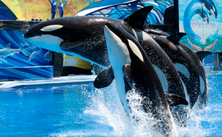 Visit Sea World – stay an extra day!